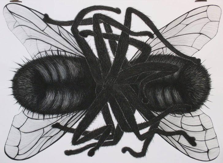 Wilma Stegeman Fly eat Fly