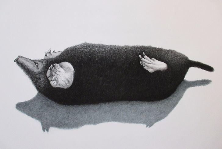 Wilma Stegeman Mol